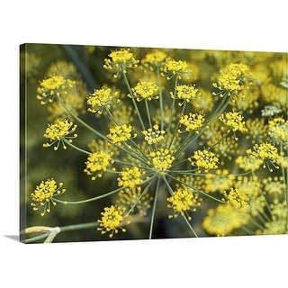 Premium Thick-Wrap Canvas entitled Close up of yellow flowers