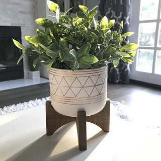 "Link to 12""H tea plant in 5"" GEO Ceramic footed pot - ONE-SIZE Similar Items in Decorative Accessories"