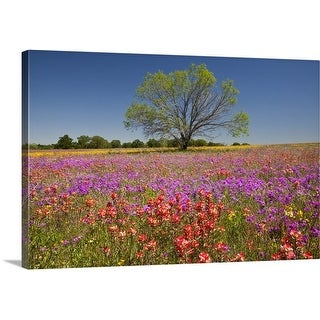Premium Thick-Wrap Canvas entitled Spring mesquite trees growing in wildflowers, Texas, USA, North America