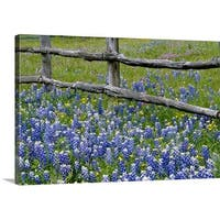 Premium Thick-Wrap Canvas entitled Bluebonnet flowers blooming around weathered wood fence, Texas