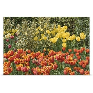 Poster Print entitled Border with mixed tulips
