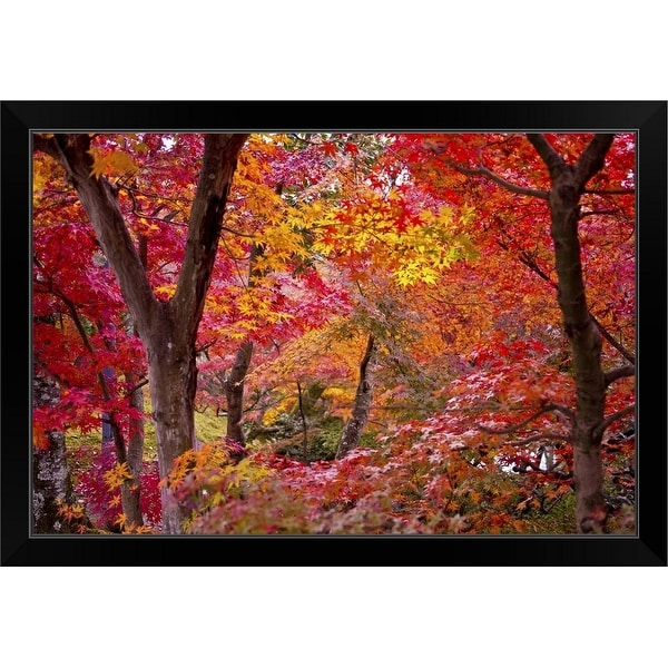 """""""Japanese maple trees."""" Black Framed Print"""