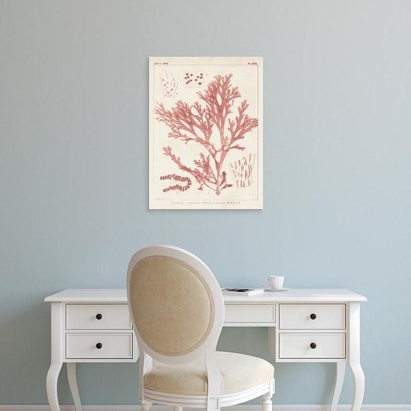 Easy Art Prints Vision Studio's 'Antique Coral Seaweed I' Premium Canvas Art