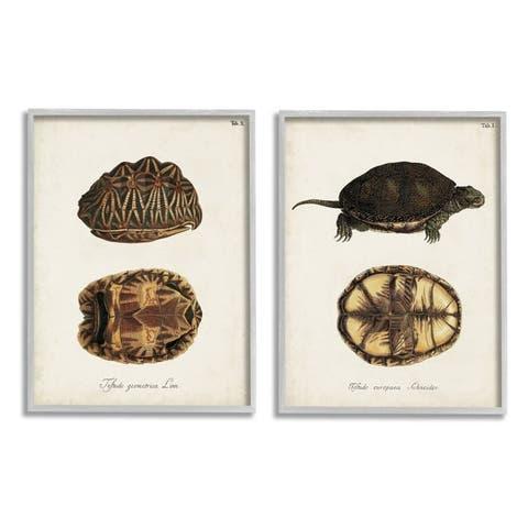 Stupell Industries Study of Antique Turtles Shells Latin Script Framed Wall Art