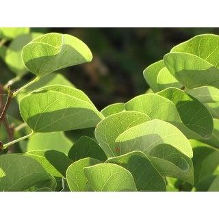 Green Leaves Plant Photograph Unframed Fine Art Print