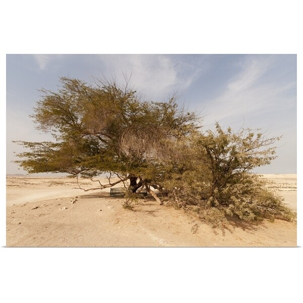 """""""Tree of Life, 400-year-old mesquite tree, near Jebel Dukhan."""" Poster Print"""
