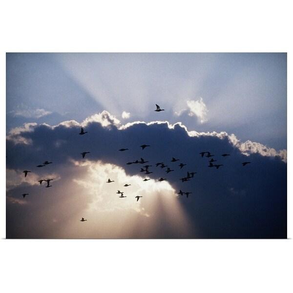 """Birds in flight"" Poster Print"