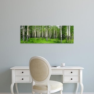 Easy Art Prints Panoramic Images's 'Aspen trees in a forest, Banff, Banff National Park, Alberta, Canada' Canvas Art