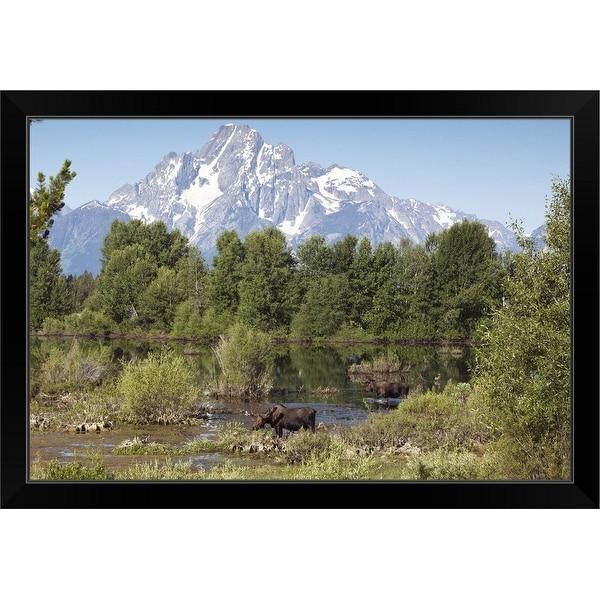 """""""Bull Moose in Grand Tetons"""" Black Framed Print"""