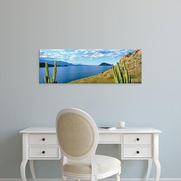 Easy Art Prints Panoramic Image 'Cardon cactus, Loreto Bay National Marine Park, BajCaliforniSur, Mexico' Canvas Art