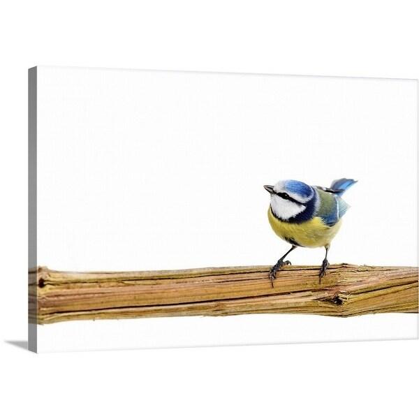 Shop Premium Thick Wrap Canvas Entitled Blue Tit Bird