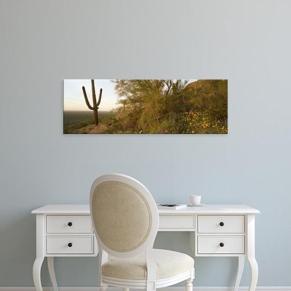 Easy Art Prints Panoramic Images's 'Cactus in desert, Picacho Peak State Park, Arizona, USA' Premium Canvas Art
