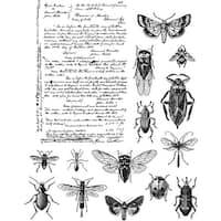 "Tim Holtz Cling Stamps 7""X8.5""-Entomology"