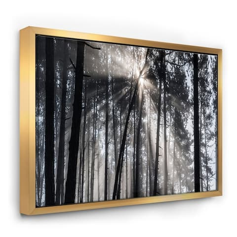 Designart 'Sunbeams through Black White Forest' Forest Framed Canvas Wall Art Print
