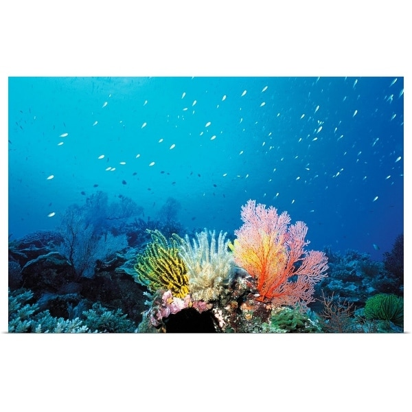 Poster Fishes Coral Reef Many Colorful Tropical Underwater Cloth Print 8