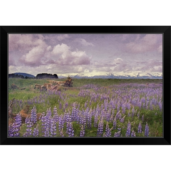 """Meadow of Lupine flowers in Alaskan wilderness. Moss covered logs among flowers."" Black Framed Print"