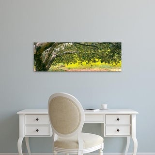 Easy Art Prints Panoramic Image 'Sycamore tree in mustard field, San Clemente Canyon, San Diego, California' Canvas Art