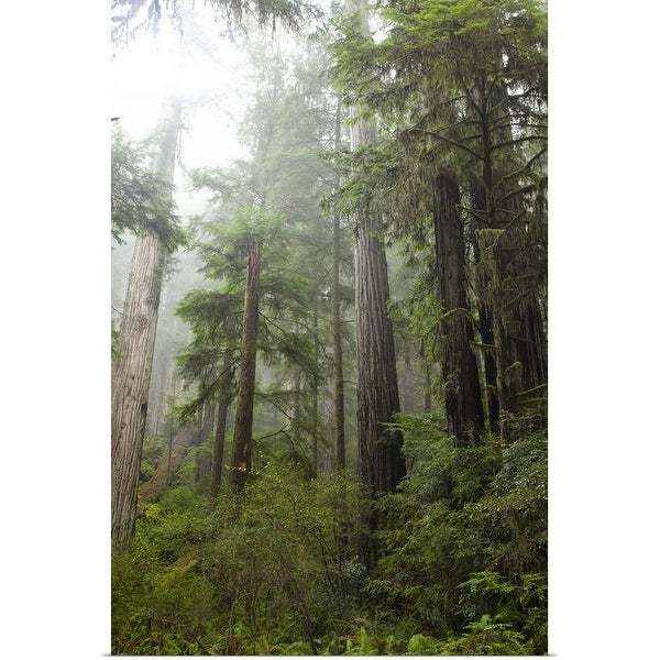 """Scenic image of Redwood National Park, CA"" Poster Print"