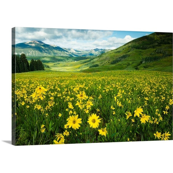 """""""Scenic view of wildflowers in a field, Crested Butte, Colorado"""" Canvas Wall Art"""