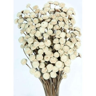 Dried Floral Button Flowers - Natural Color 3-4 oz Regular size / 1 lb giant size Length 16-22in. Case of 15 bunches - Natural