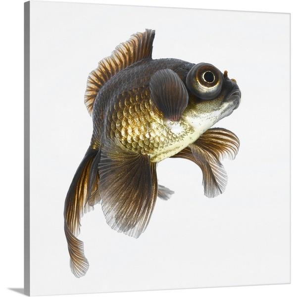 """Black moor goldfish (Carassius auratus)"" Canvas Wall Art"