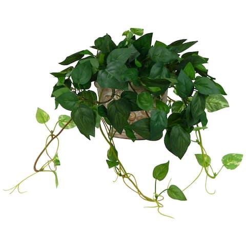Mini Pothos Vine In An Angel Ceramic Planter - Green