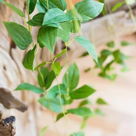 RusticReach Artificial Green Ivy Leaf Vines
