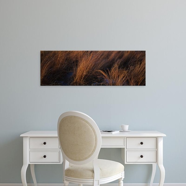 Easy Art Prints Panoramic Images's 'Bluestem Grass in a field, Marion county, Illinois, USA' Premium Canvas Art