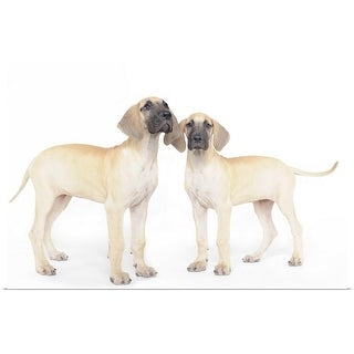 """""""Two Great Dane puppies"""" Poster Print"""