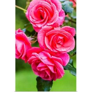 """""""Roses"""" Poster Print"""