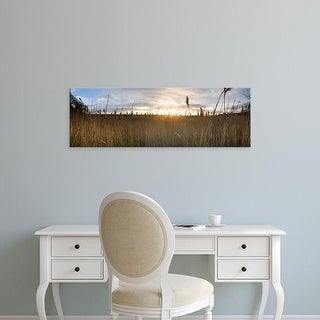 Easy Art Prints Panoramic Images's 'Reeds in a field at sunset, Holkham, Norfolk, England' Premium Canvas Art
