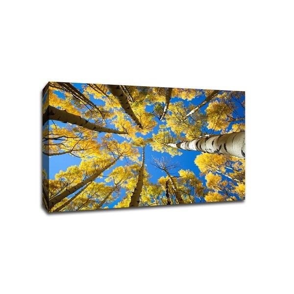 Aspen Trees - Aspen, Colorado - Capturing America - 36x24 Gallery Wrapped Canvas Wall Art