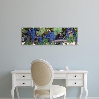 Easy Art Prints Panoramic Images's 'USA, California, Napa Valley, grapes' Premium Canvas Art