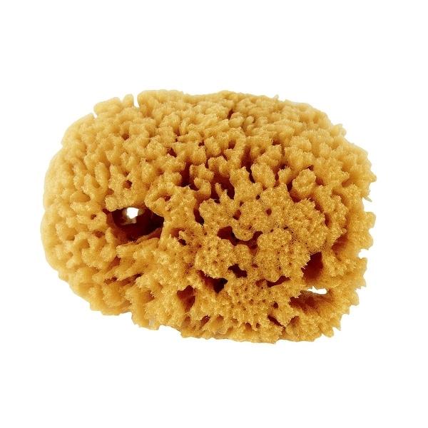Purdy Small Sea Sponge