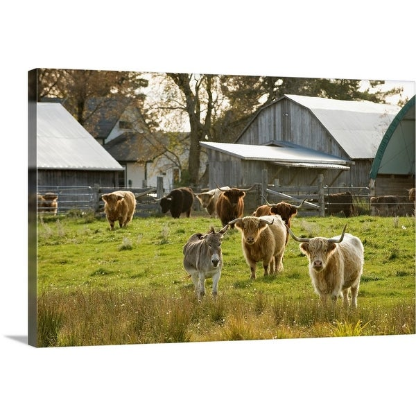 """""""Donkey with Highland Cattle in Pasture, Burnt River, Ontario, Canada"""" Canvas Wall Art"""
