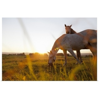"""""""Horse grazing in rural field"""" Poster Print"""