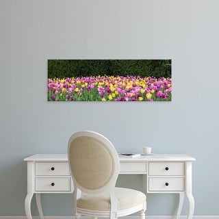 Easy Art Prints Panoramic Image 'Tulip flowers in garden, Chicago Botanic Garden, Glencoe, Cook, Illinois' Canvas Art