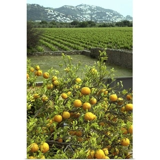 """Oranges and vineyard"" Poster Print"