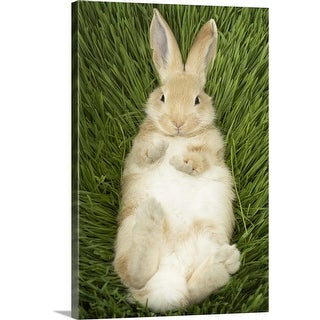 """""""Rabbit laying in grass"""" Canvas Wall Art"""