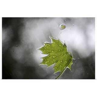 """Green leaf"" Poster Print"