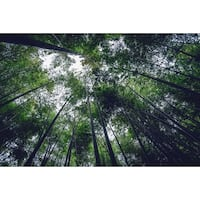 Forest Trees Photograph Wall Art Canvas