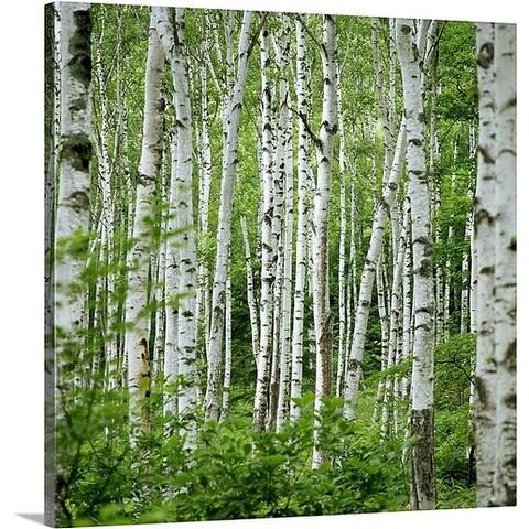 Premium Thick-Wrap Canvas entitled Birch trees (Betula sp.), summer