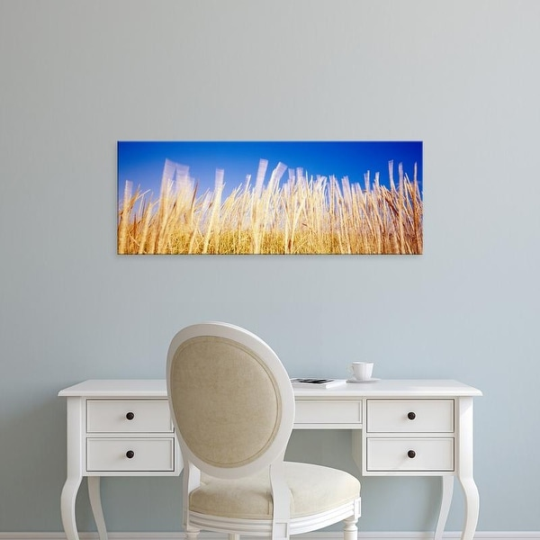 Easy Art Prints Panoramic Images's 'Marram grass in a field, Washington State, USA' Premium Canvas Art