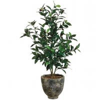 Allstate Floral WP7526-GR-TT 3 ft. Olive Tree in Pot Two Tone Green