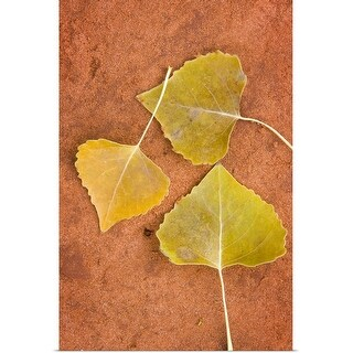 """Cottonwood leaves"" Poster Print"