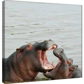 """PTM Images 9-101269  PTM Canvas Collection 12"""" x 12"""" - """"Hippos"""" Giclee Hippos Art Print on Canvas"""