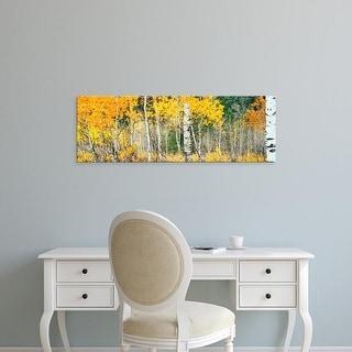 Easy Art Prints Panoramic Image 'Aspen, Autumn, Oxbow Bend, Grand Teton National Park, Teton, Wyoming' Canvas Art