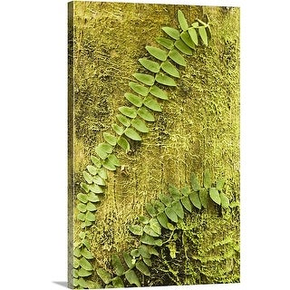 Premium Thick-Wrap Canvas entitled Vine On Moss-Covered Tree