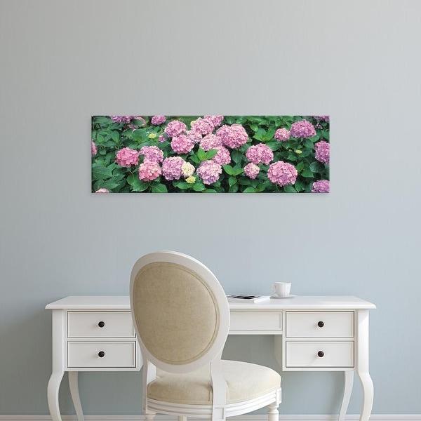 Easy Art Prints Panoramic Images's 'Hydrangea' Premium Canvas Art
