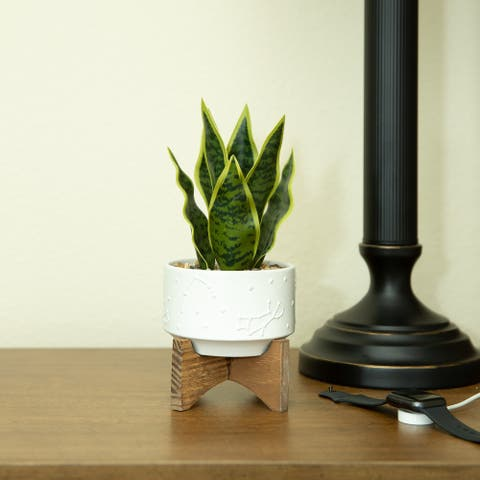 "9.7"" Artificial Plant Fake Snake Plant in 4.25"" Constalition Ceramic Pot on Wood Stand - ONE-SIZE"